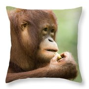 Close-up Of An Orangutan Pongo Pygmaeus Throw Pillow
