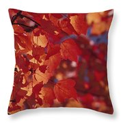 Close-up Of Autumn Leaves Throw Pillow
