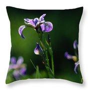 Close-up Of Blue Flag Irises Iris Throw Pillow
