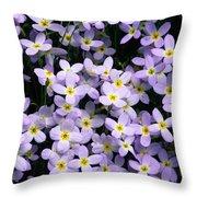Close-up Of Bluet Flowers Houstonia Throw Pillow