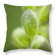Close-up Of Flower Buds Throw Pillow