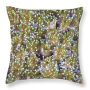 Close-up Of Open Coral Polyps, Papua Throw Pillow