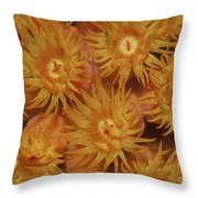 Close-up Of Orange Cup Coral Throw Pillow