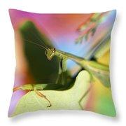 Close-up Of Praying Mantis Throw Pillow