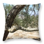 Close Up Olive Tree Throw Pillow