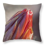Close Up On Cactus Flower Bud Throw Pillow