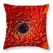 Close Up Orange Mum Throw Pillow