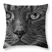 Close Up Portrait Of A Cat Throw Pillow