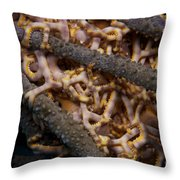 Close-up View Of Basket Stars Feeding Throw Pillow