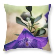 Close View Of A Balloon Flower In Bloom Throw Pillow