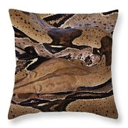 Close View Of A Brightly Patterned Boa Throw Pillow