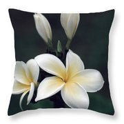 Close View Of A Delicated Plumeria Throw Pillow