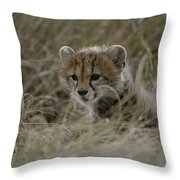 Close View Of A Juvenile Cheetah Throw Pillow