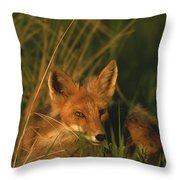 Close View Of A Red Fox At Rest Throw Pillow