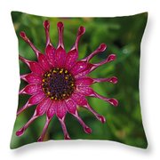 Close View Of A South African Daisy Throw Pillow