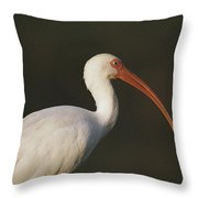 Close View Of A White Ibis Throw Pillow
