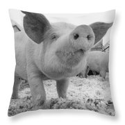 Close View Of A Young Pig In A Snowy Throw Pillow
