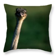 Close View Of An Ostrich Struthio Throw Pillow