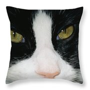 Close View Of Black And White Tabby Cat Throw Pillow
