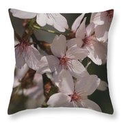 Close View Of Cherry Blossoms Throw Pillow