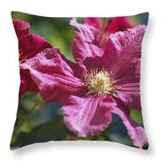 Close View Of Clematis Flowers Throw Pillow
