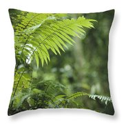 Close View Of Ferns In A Papua New Throw Pillow