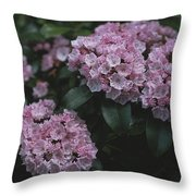 Close View Of Flowering Mountain Laurel Throw Pillow