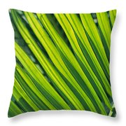 Close View Of Palm Fronds Throw Pillow