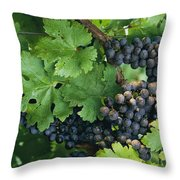 Close View Of Red Grapes On The Vine Throw Pillow