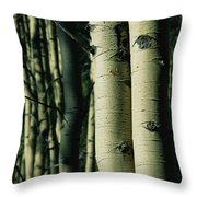 Close View Of Several Aspen Tree Trunks Throw Pillow