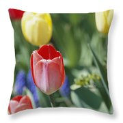 Close View Of Spring Tulips In Bloom Throw Pillow