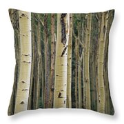 Close View Of Tree Trunks In A Stand Throw Pillow