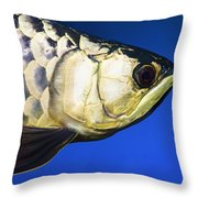 Closeup Of A Fish Throw Pillow