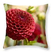 Closeup Of A Red Flower In Butchart Throw Pillow