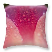 Closeup Of Dew On Tulip Petal Throw Pillow by Craig Tuttle