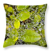 Closeup Of Morning Dew On Leaves Throw Pillow