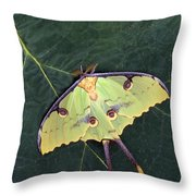 Closeup Of Unique Butterfly Throw Pillow