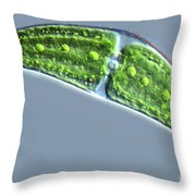 Closterium Lunula Throw Pillow by M. I. Walker