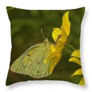 Clouded Sulphur Butterfly Din099 Throw Pillow