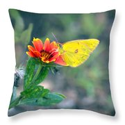 Clouded Sulphur Butterfly Square Throw Pillow