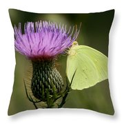 Cloudless Sulfur Butterfly On Bull Thistle Wildflower Throw Pillow