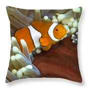 Clown Anemonefish In Anemone, Great Throw Pillow
