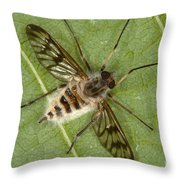 Cluster Fly Killed By Parasitic Fungus Throw Pillow