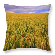 Co Waterford, Ireland Poppies In A Throw Pillow