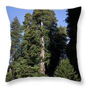Coast Redwood Throw Pillow