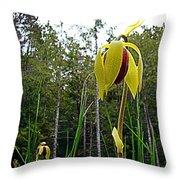 Cobra Lily Blossom Throw Pillow