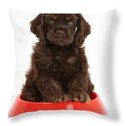 Cocker Spaniel Pup In Doggy Dish Throw Pillow by Mark Taylor