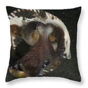 Coconut Octopus In Shell, North Throw Pillow