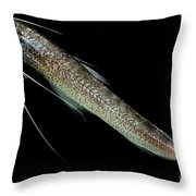 Codlet Throw Pillow