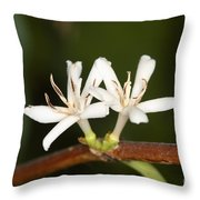 Coffee Flowers Throw Pillow